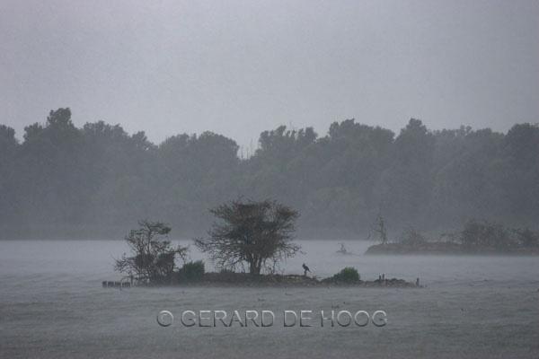 lepelaars plassen in regenbui