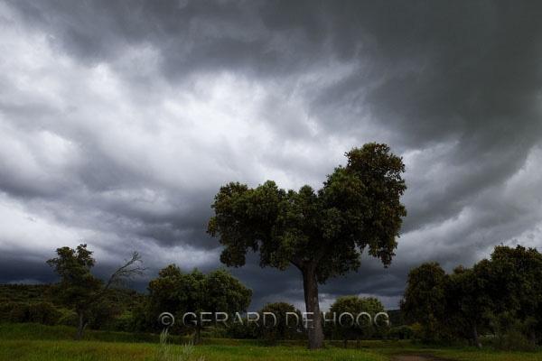 steeneik in onweersbui