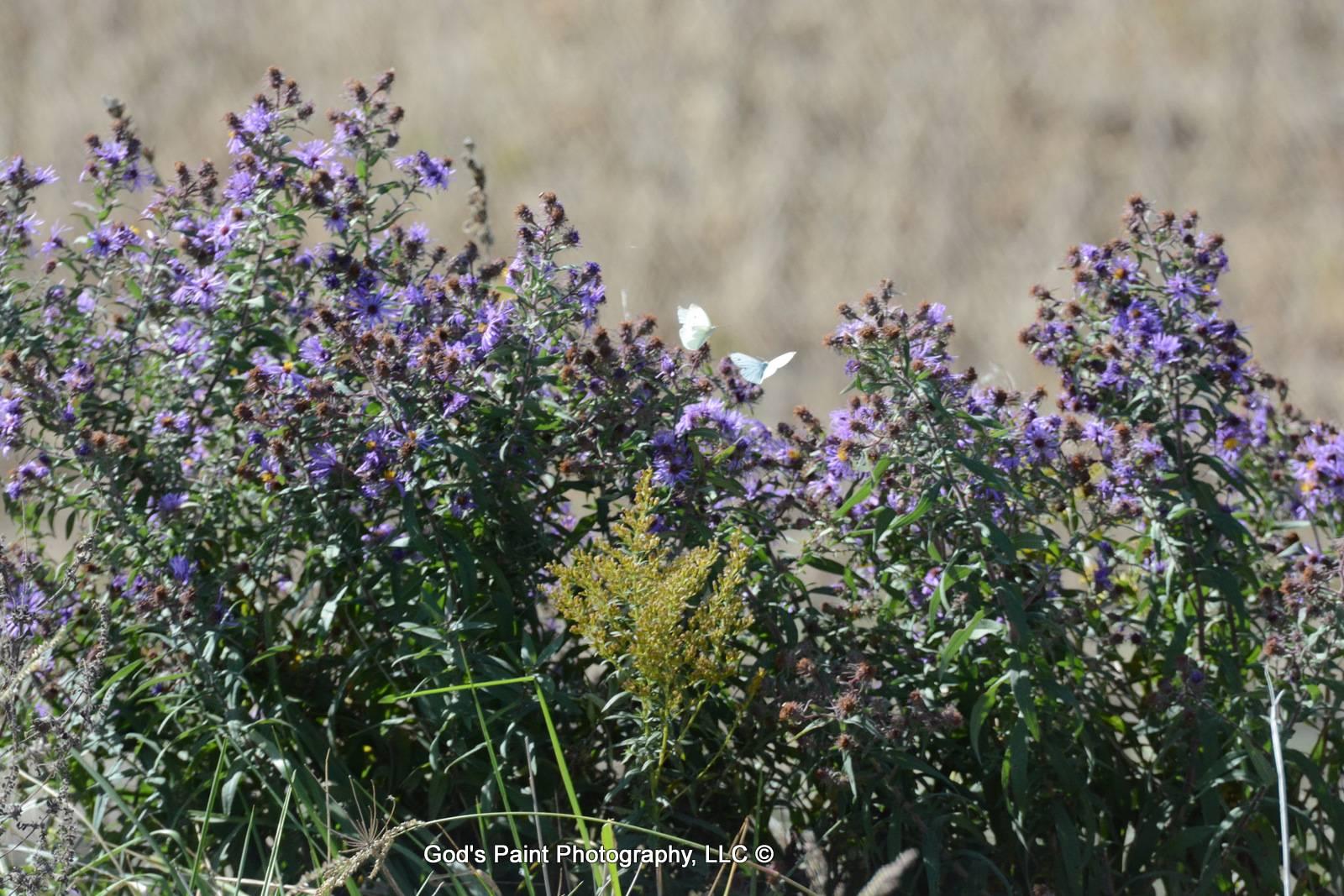 Purple Flowers & White Butterflies