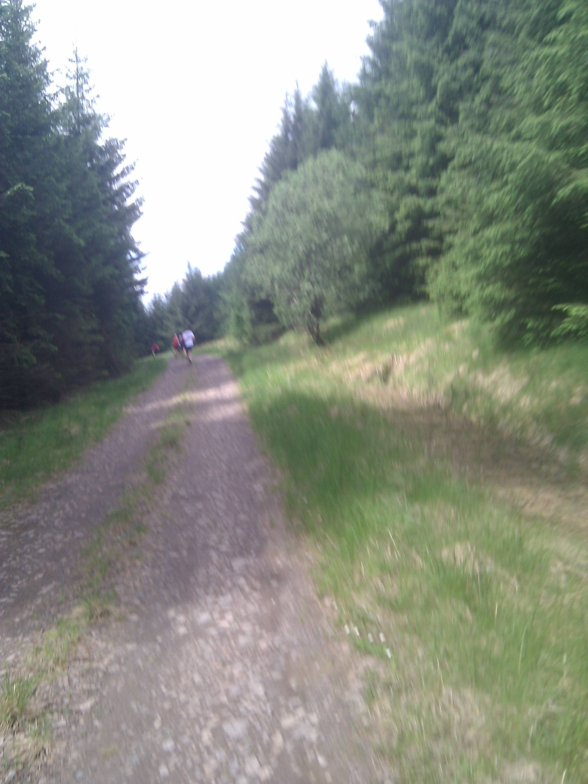 A shaky shot running in the forest.