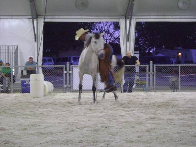 Desensitizing to weight on horse's back.