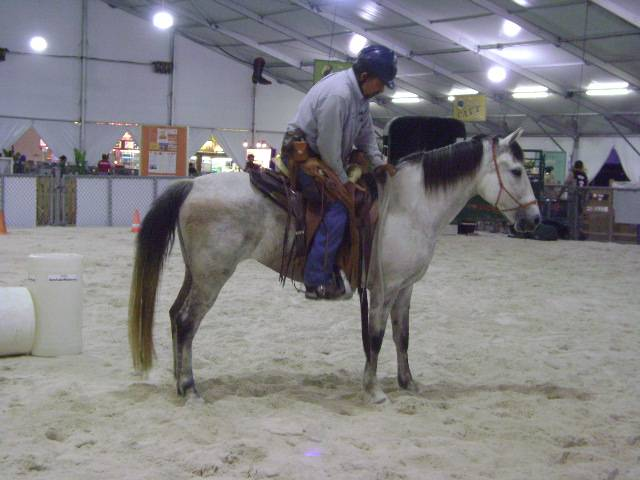 Horse accepts the rider.