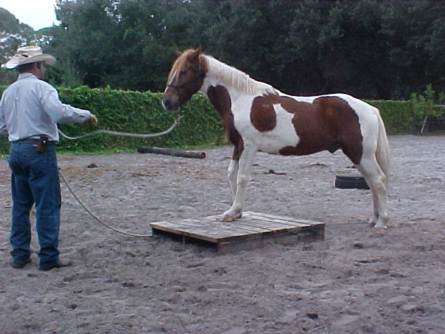 This paint gelding was brought by its owner for a tune up.