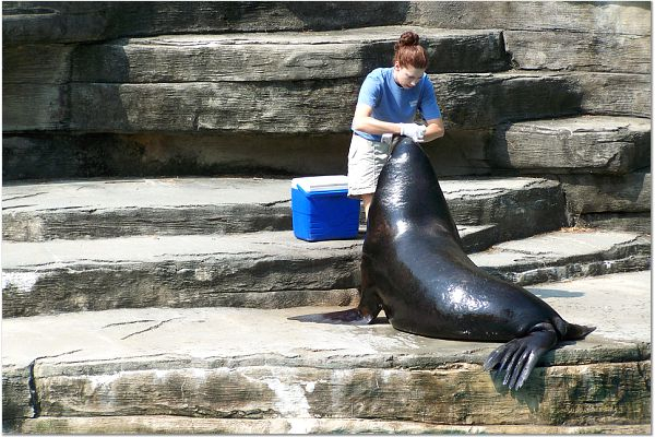 FEEDING THE SEAL