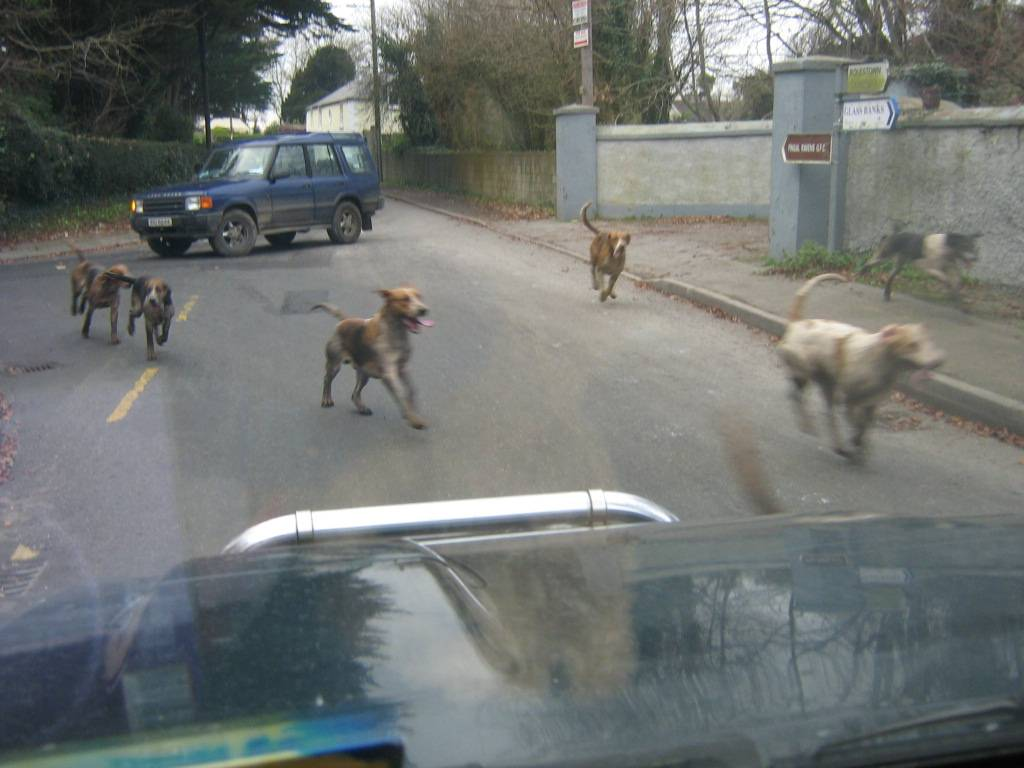 Ward union hounds rioting
