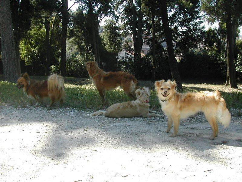 I cani di Flavia