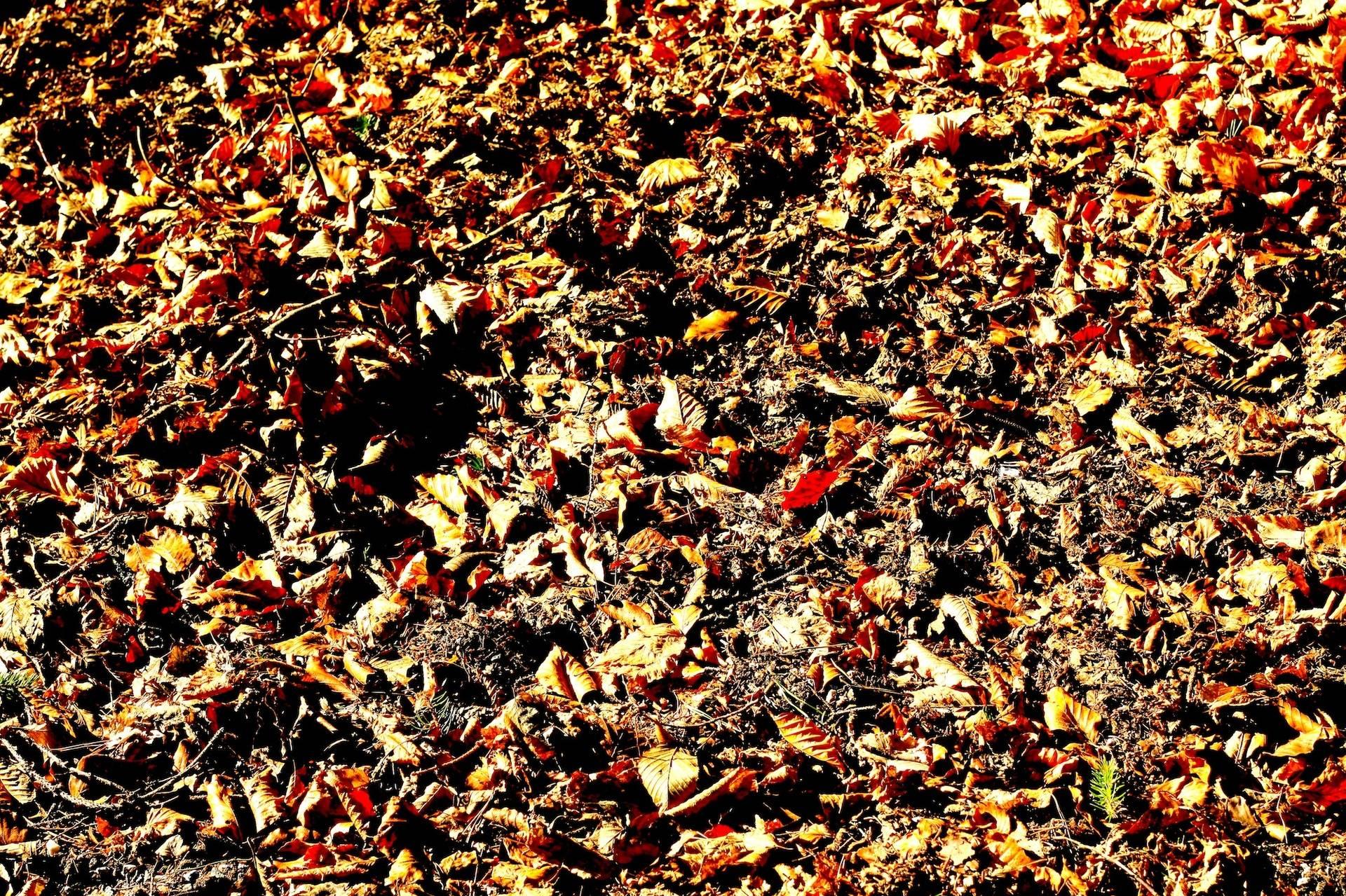 Autumn leaves - oooh