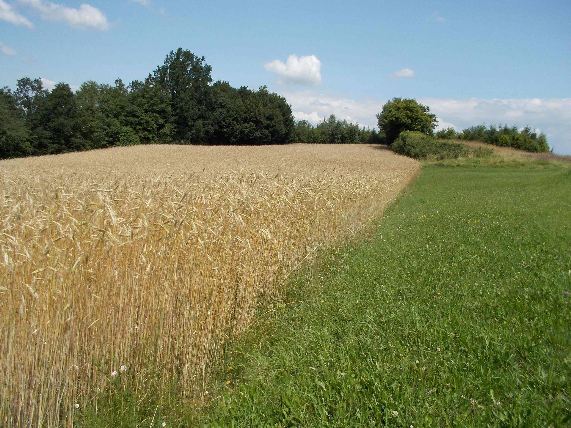 Fields boundaries