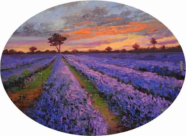 Evening on lavender field.
