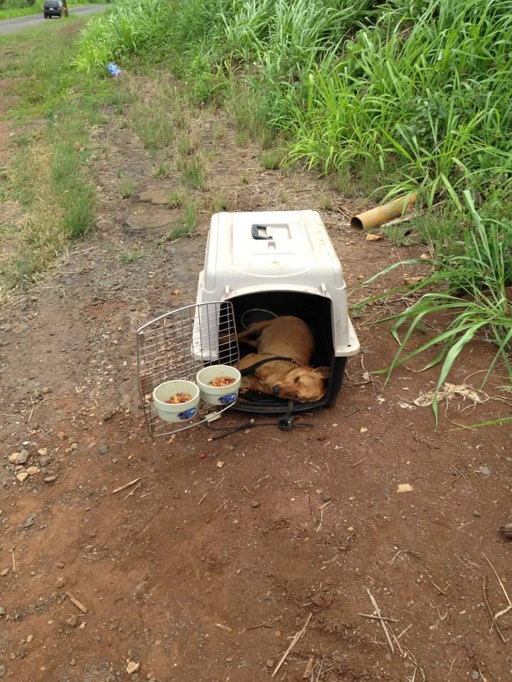 Dog found dead in Waialua