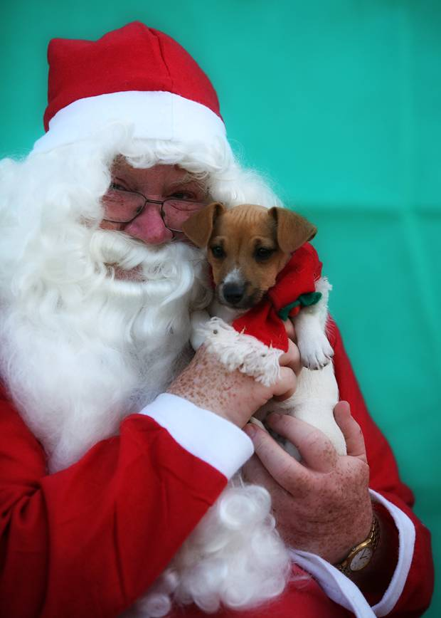 Maggies Pup 09 and Santa
