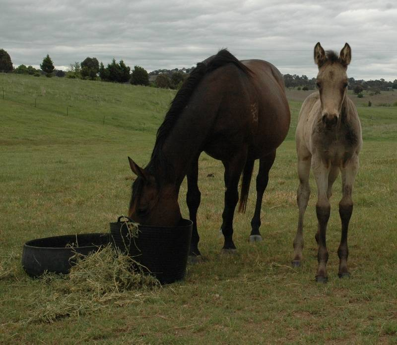 Promise and filly 6wks