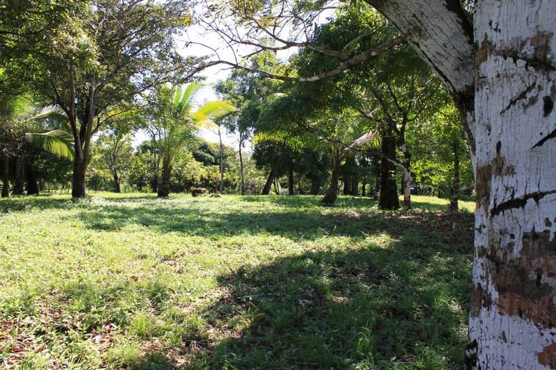 Large Lot at La Casa Verde Panama