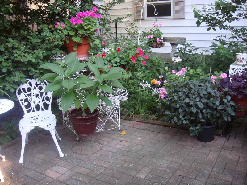Kathy and Brian Thompson's back yard garden.