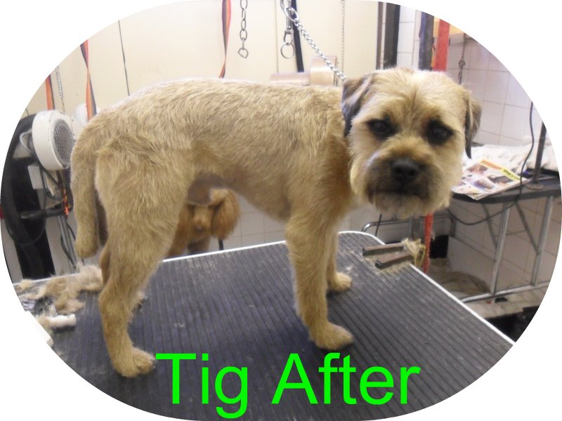 Tigs day at the groomers