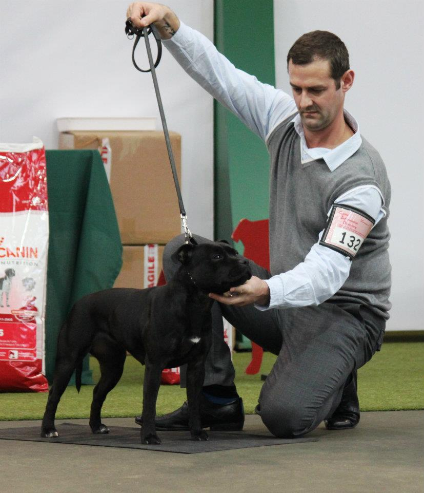 Daisy at SBT Champ show 2011, pic by Ed Dolphin