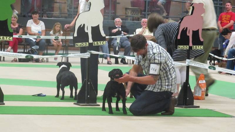 1st MPD Notts & Derby Ch show