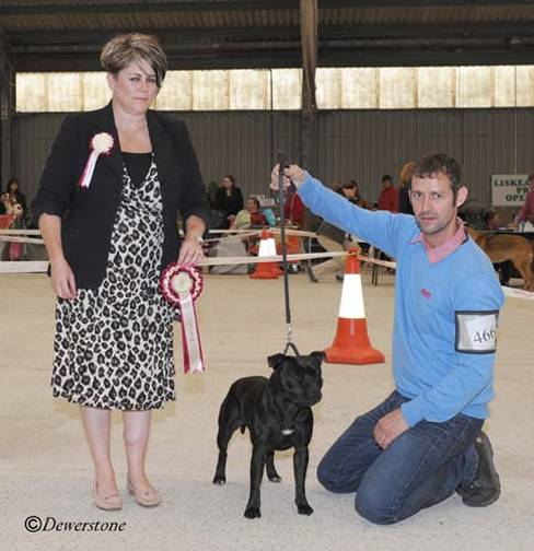 Daisy Best in Group, Liskeard & District Premier Open Show , pichttp://www.dewerstonephotography.co.uk/ .Judge Jo Pinfold