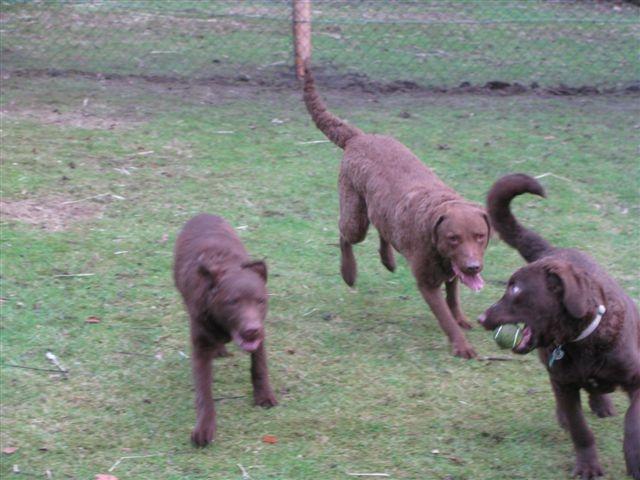 Marli, Tia and Lola 12/01/11