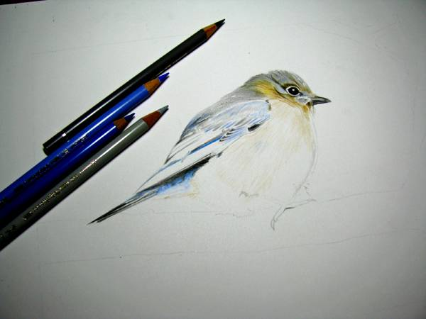 Bird-Work in progress