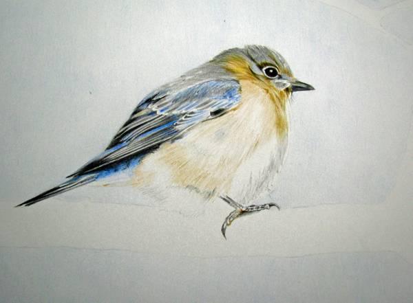 Bird-Work in progress