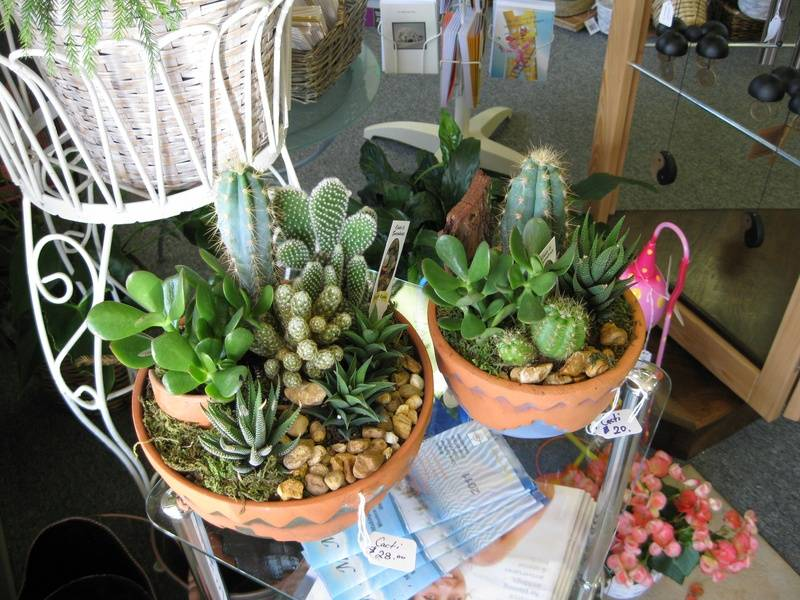 Cacti Dish Gardens