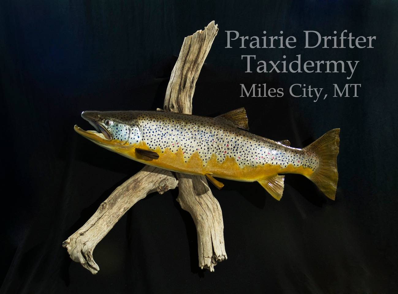Brown Trout  Reproduction