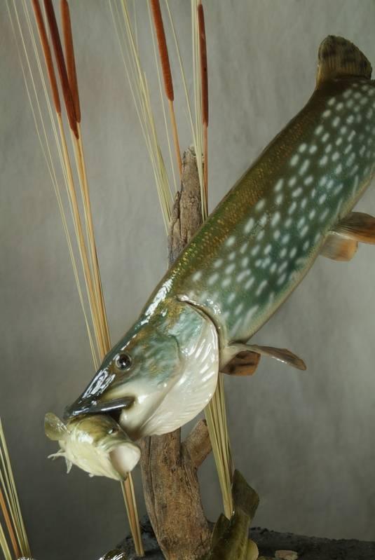 Bonefish  Reproduction