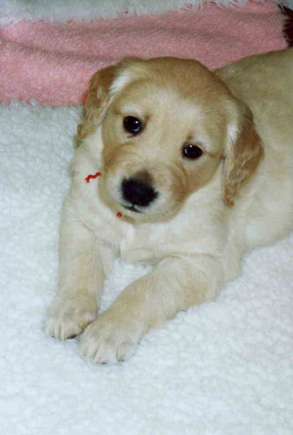 Keegan/Keesha Litter - October 2002