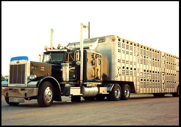 Double-decker cattle trailer carrying horses