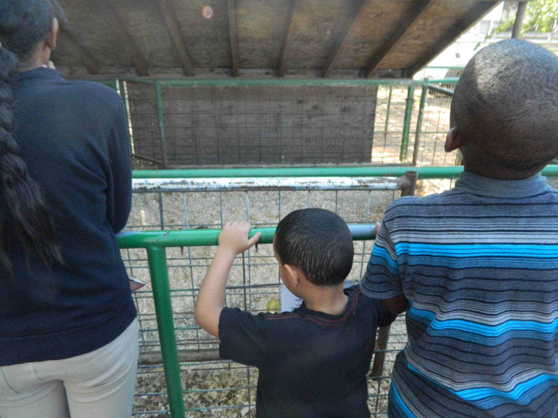 Looking at the Animals