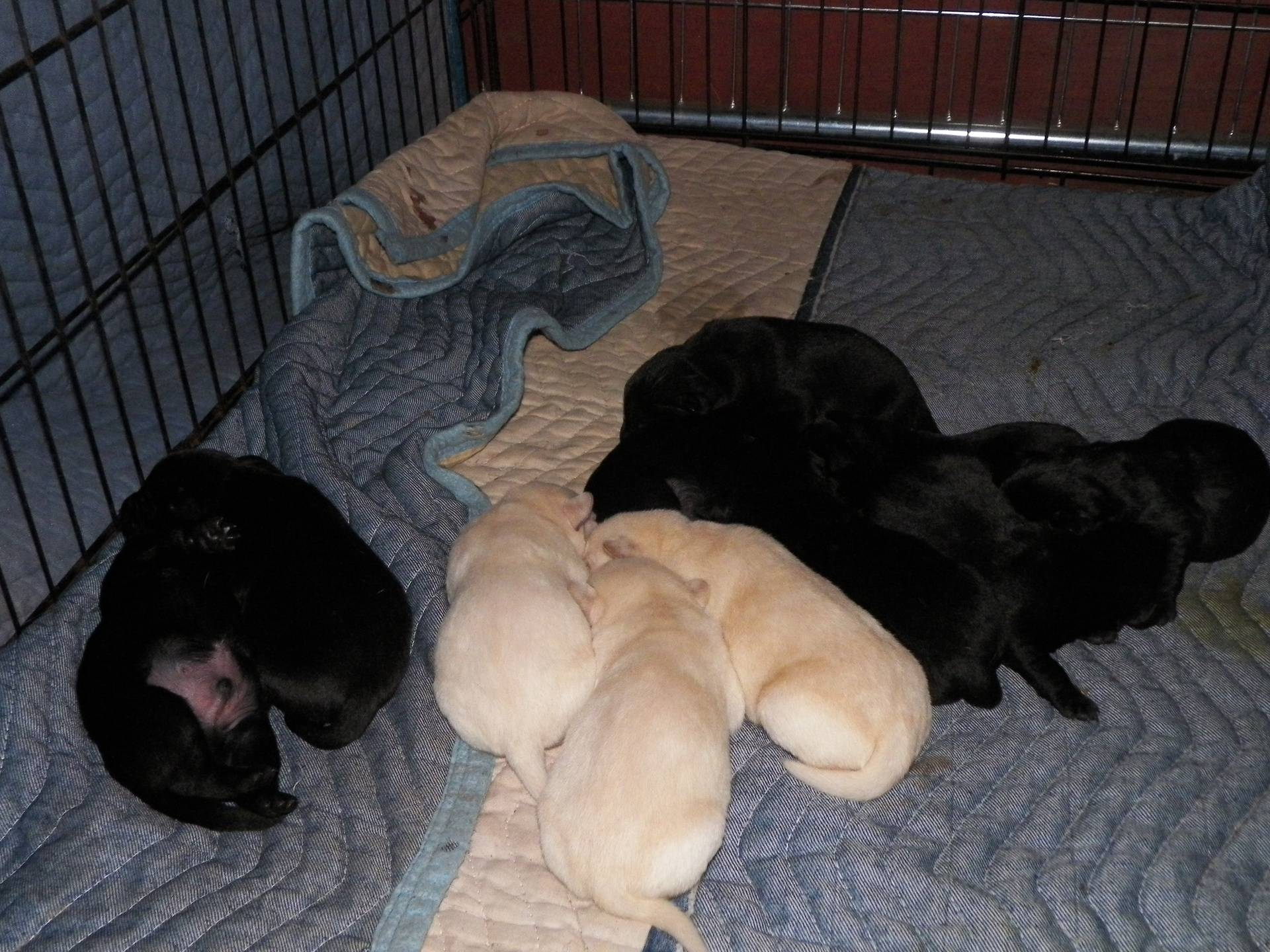 The litter at 1 week old