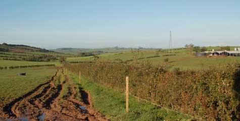 Lochea Farm