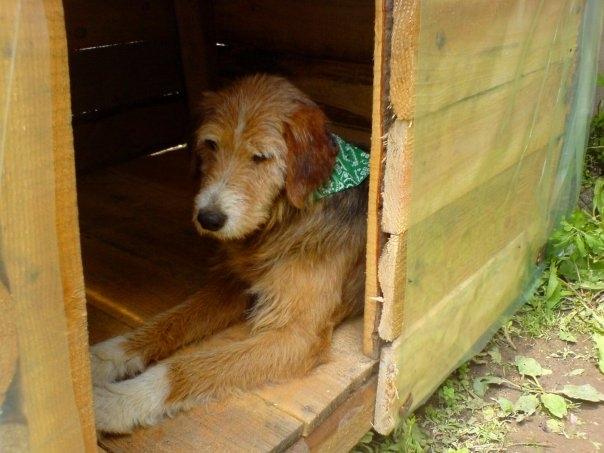 Barney resting in his pen