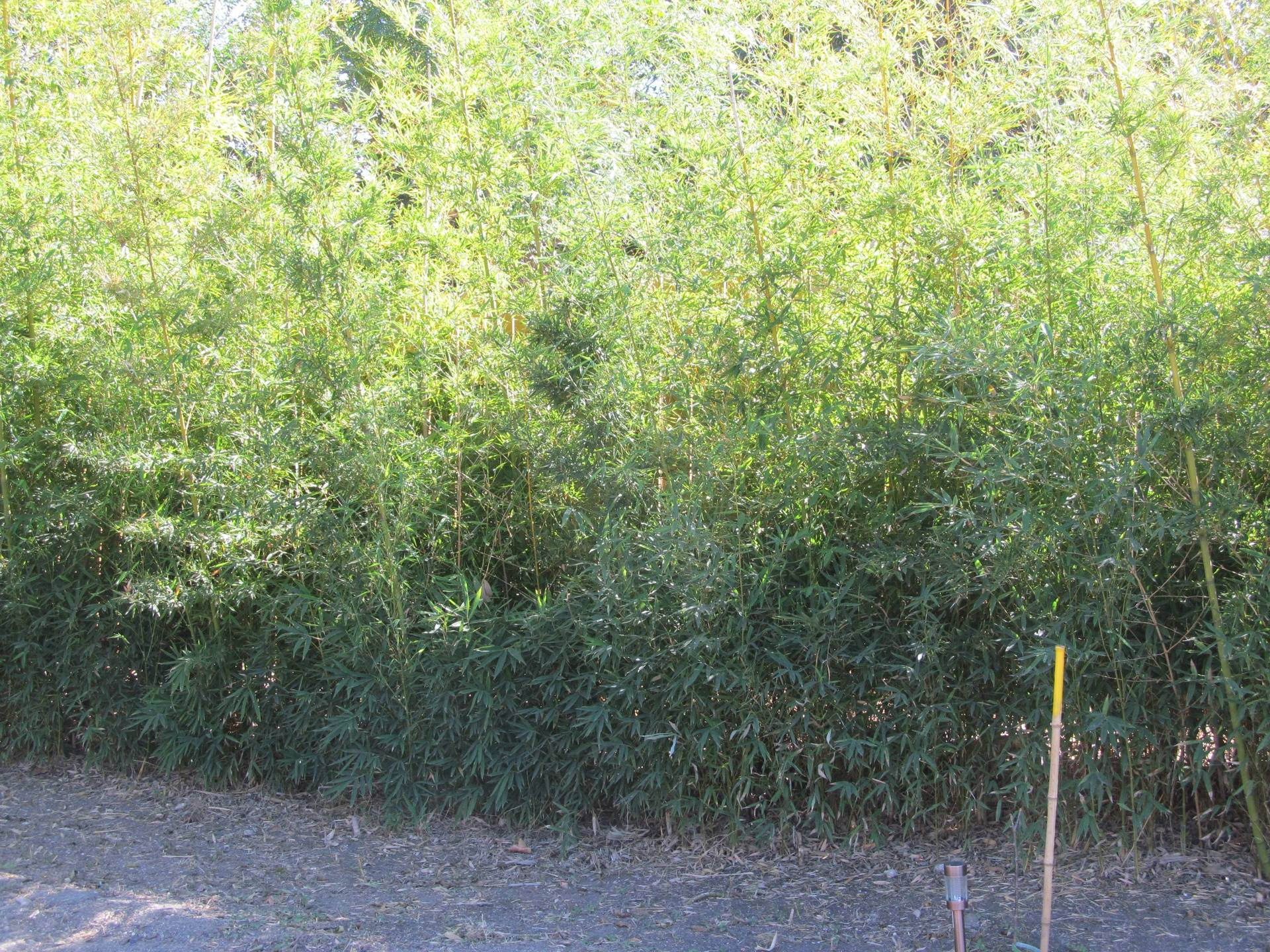 Our bamboo that helped get our NWF Wildlife Habitat Certification
