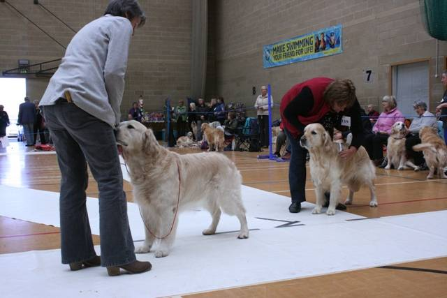 Limit_Dog_Class_13_1st_and_2nd