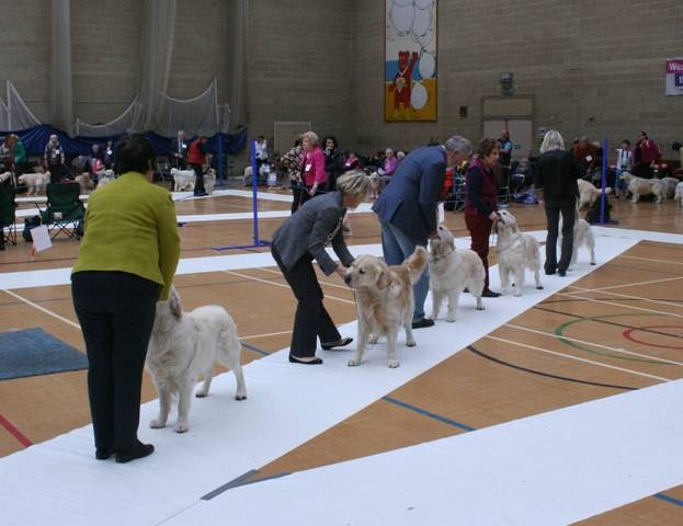 Mid_Limit_Dog_Class_12_Placings