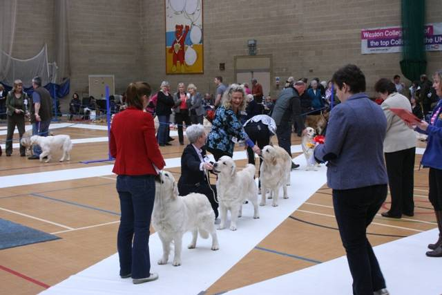 Yearling_Dog_Class_6_Placing