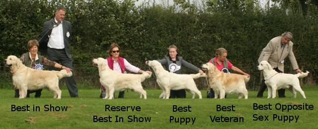 Best in Show, Reserve Best in Show, Best Puppy, Best Veteran and Best Opp Sex Puppy