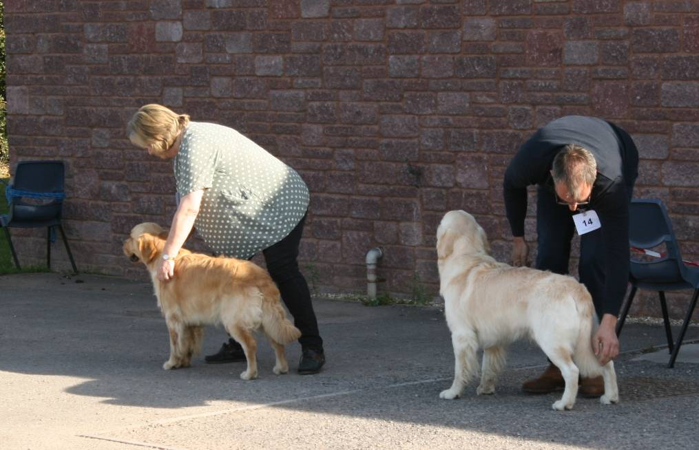 Novice Dog and Debutant Dog