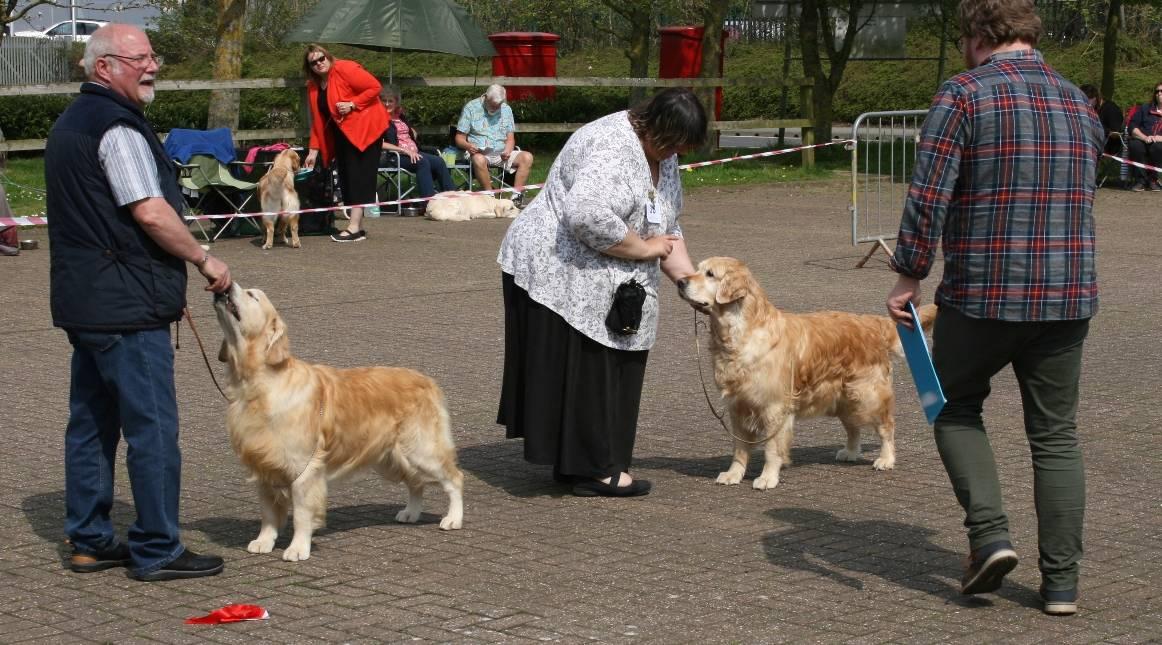 Veteran Dog or Bitch