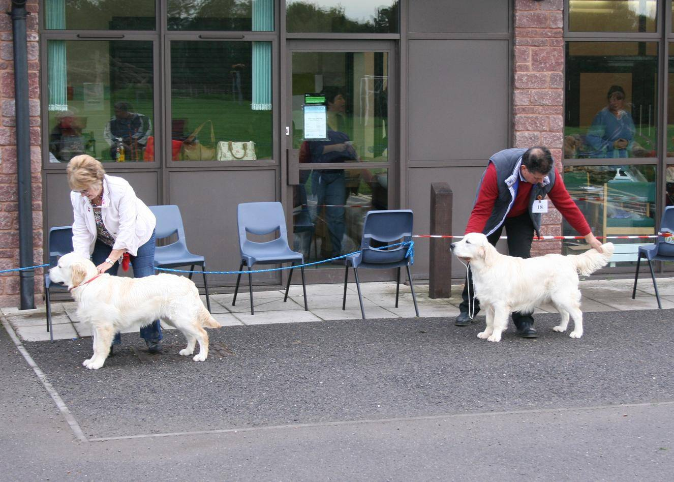 Minor Puppy Dog Entry