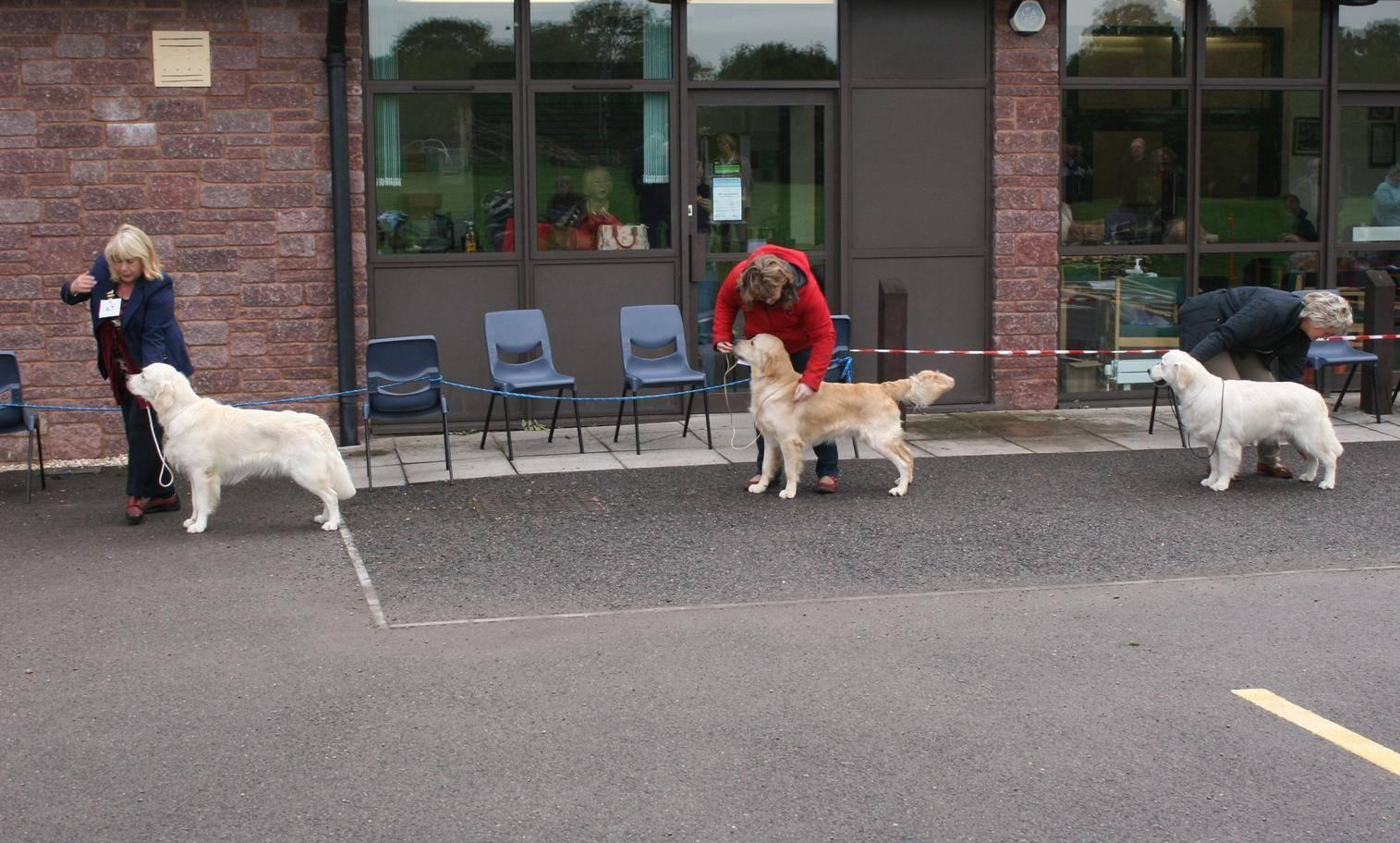 Junior Dog Entry