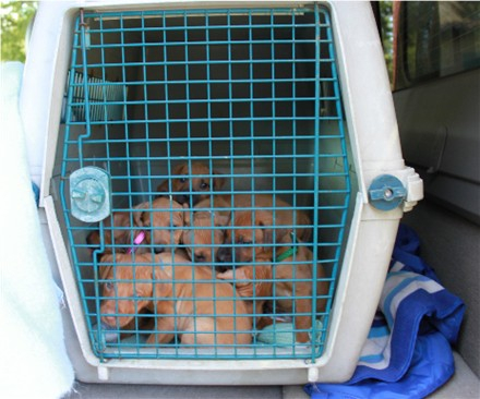 Babies are all in the crate for transport
