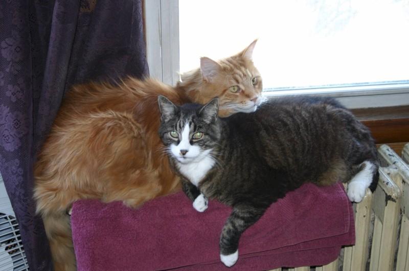 Phantom with Kai Feb 2006