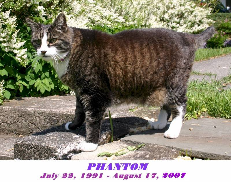 Phantom in 2005