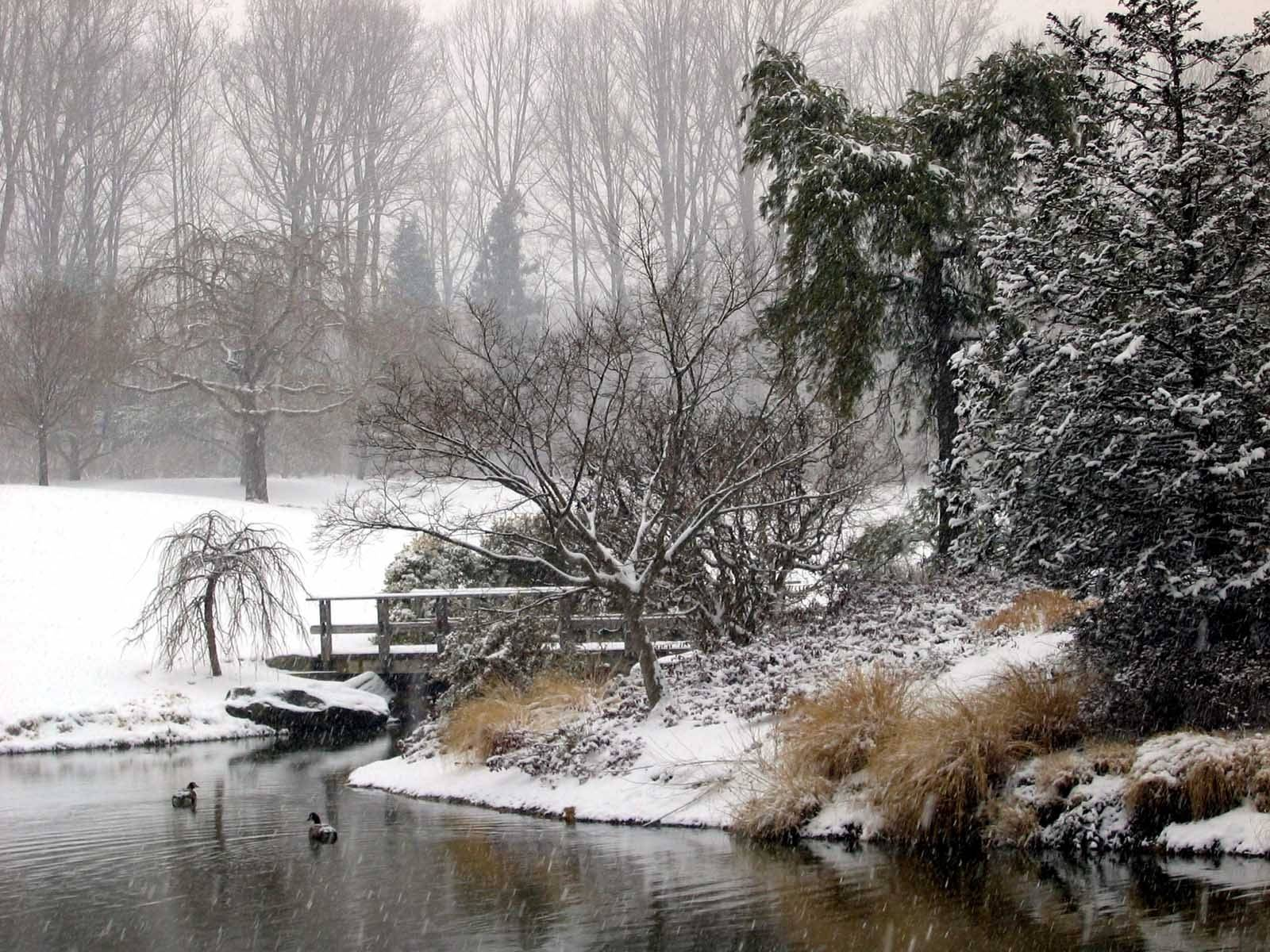 Brookside Gardens Winter Island