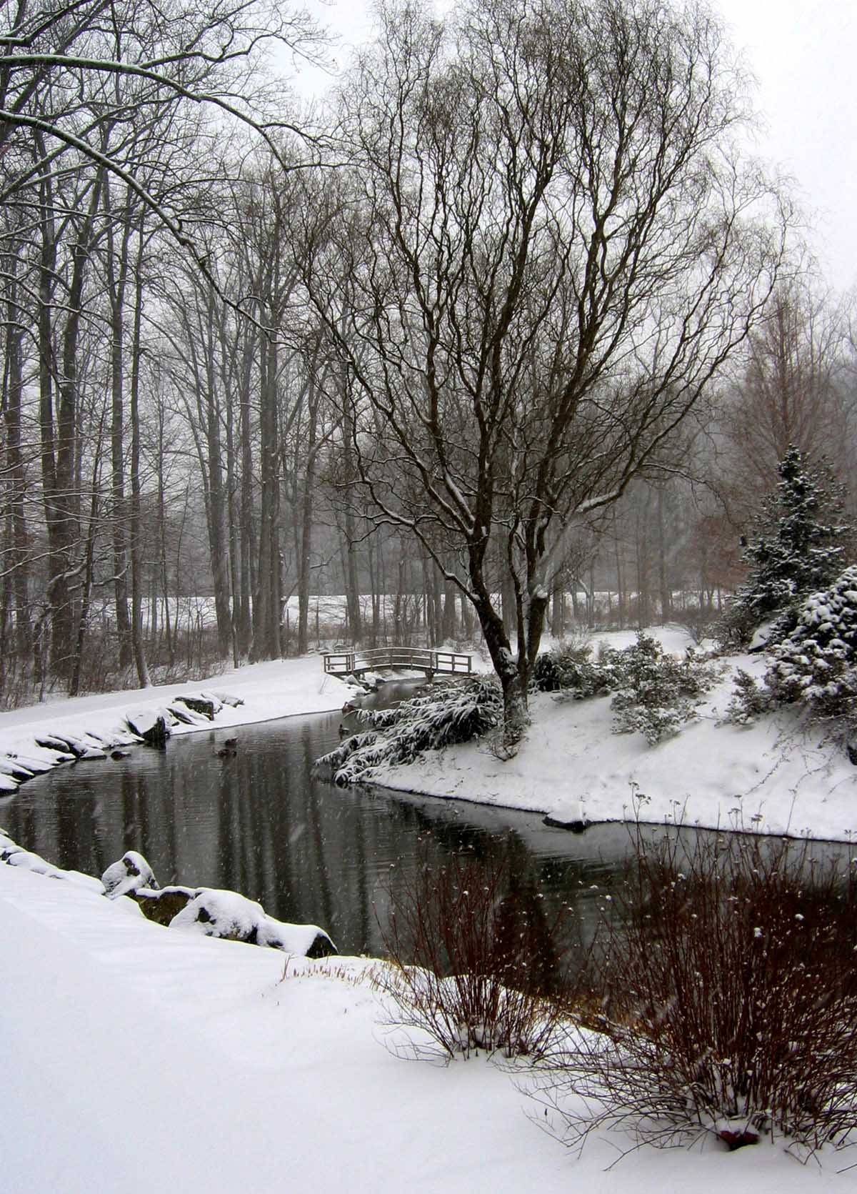 Brookside Gardens Winter Pond