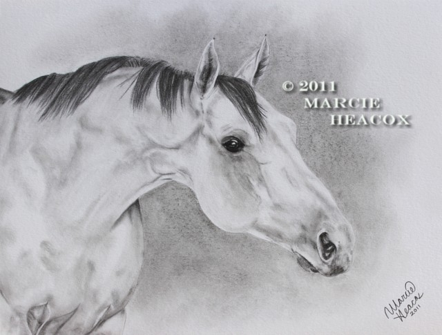 Grey Thoroughbred in Charcoal