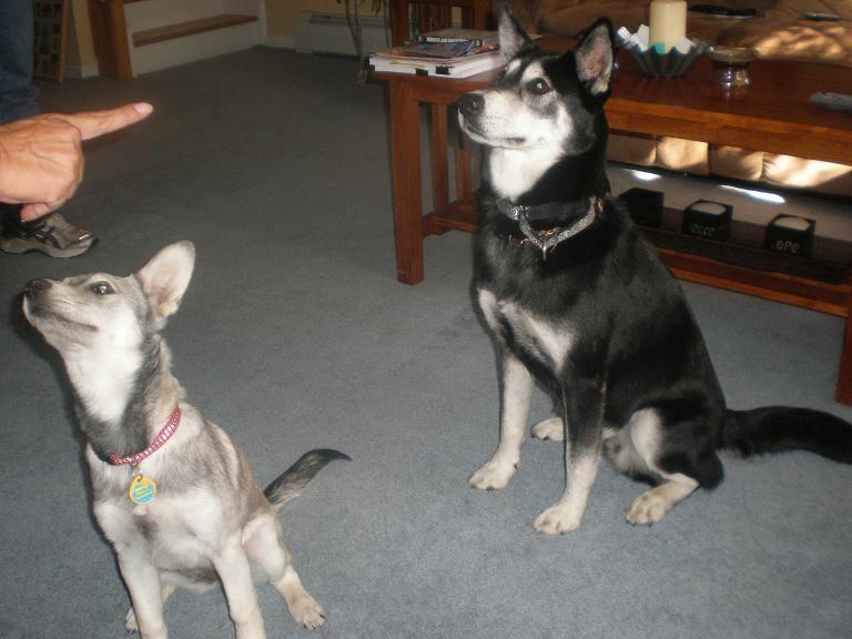 Maya AKA Arissa & Sienna